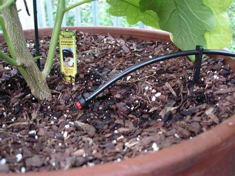 drought busting techniques bonnie plants