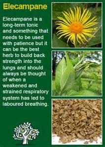 Elecampane is an aromatic stimulant and tonic, and is much used in ... Elecampane