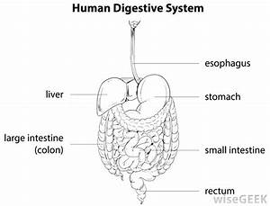 What Are The Different Types Of Digestive System Enzymes