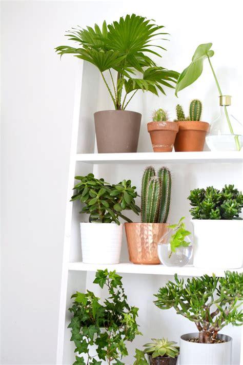 home  ideas  decorating  plants burkatron