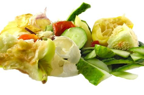 large kitchen trash plant plastic a way to reuse food scraps