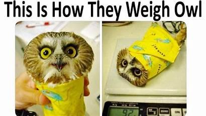 Memes Wholesome Meme Burrito V19 Memedroid Owl
