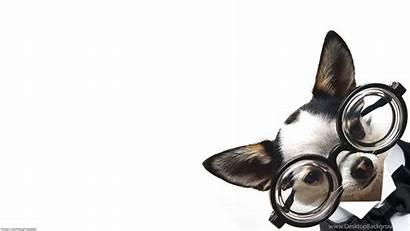 Computer Desktop Wallpapers Backgrounds Background Dog Puppy