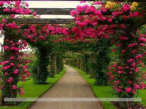 Beautiful Flower Garden Wallpapers - WallpaperSafari