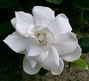 Orchidee Blüht Nicht Mehr : warum tropft die orchidee ~ Lizthompson.info Haus und Dekorationen