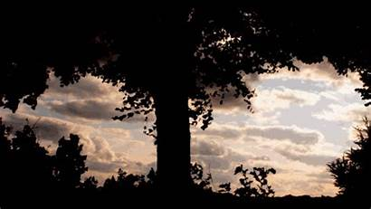 Blowing Wind Trees Tree Cancer Slow Animated