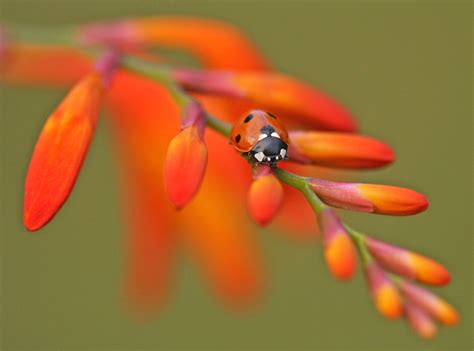 serene images   natural world