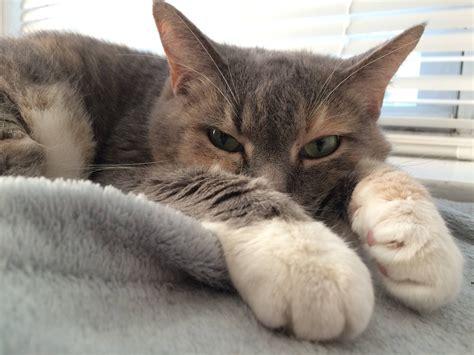 Cats Are Weird Volume 3 Billion Catsareweird Diarrhea