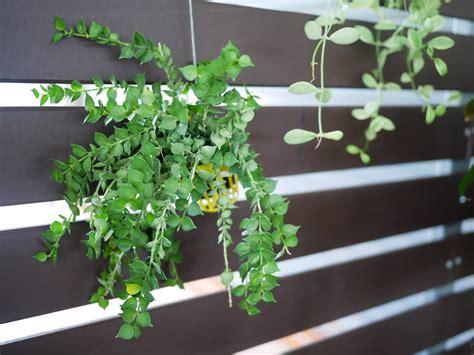 Popular Indoor Hanging Plants For Low Light