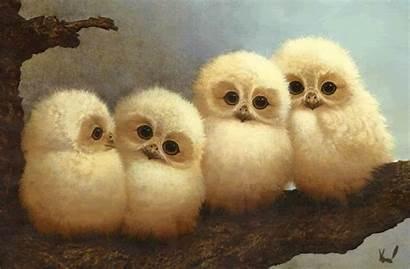 Owls Owl Adorable Babies Barn Animated Called