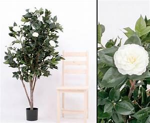 Baum Mit Weißen Blüten : kamelien camellia japonica baum g nstig shoppen ~ Michelbontemps.com Haus und Dekorationen