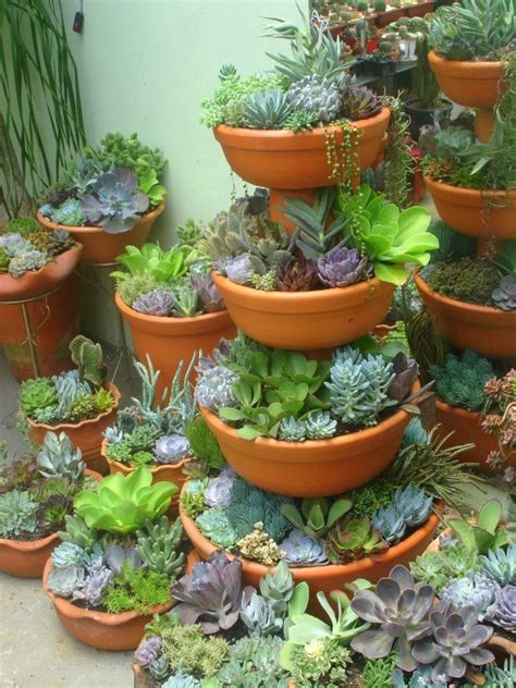 succulent containers 410 best images about succulent containers on pinterest gardens container gardening and