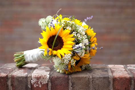 gingerlily flowers louise davids sunflower