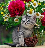 Cute Cats Kittens with Flowers