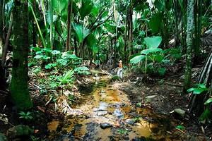 la vallee de mai praslin seychelles With photo cuisine exterieure jardin 8 hatels aux seychelles