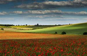 Fields, Of, Colour