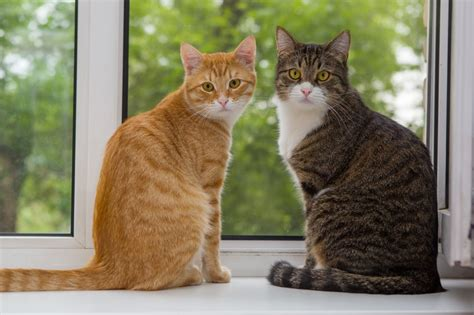 the benefits of keeping cats indoors the pet