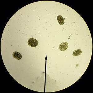 The Holy Grail of Microscope Slides | Little Creek ...