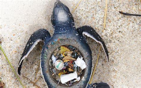 Stunning Images Expose The Horrific Impact Of Plastic