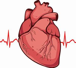 human heart clipart png - Clipground