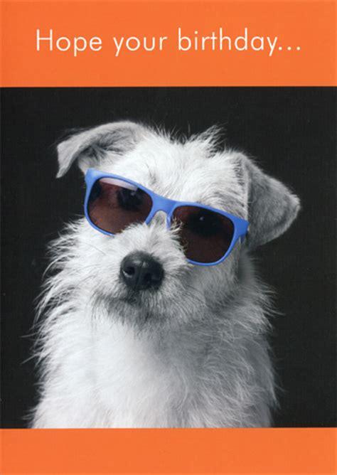 white dog  sunglasses funny humorous birthday card