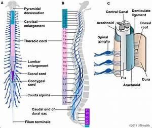 Neuroanatomy Online  Lab 4