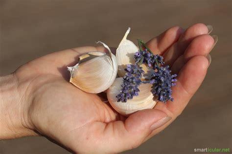 Geruchsfreier Knoblauch 18 Tricks Gegen Knoblauchfahnen