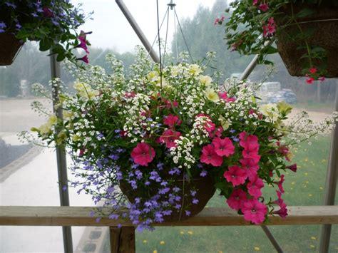 blumen für den balkon h 228 ngepflanzen f 252 r balkon welche pflanzen sind auf den balkon zu h 228 ngen terrassen
