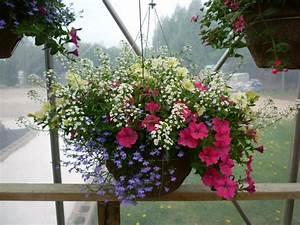 Blumen Für Den Balkon : h ngepflanzen f r balkon welche pflanzen sind auf den ~ Lizthompson.info Haus und Dekorationen
