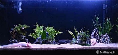 aquarium sur mesure alsace aquarium sur mesure