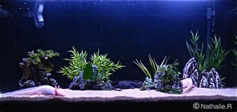 quel neon choisir pour aquarium aquarium id 233 al pour axolotls