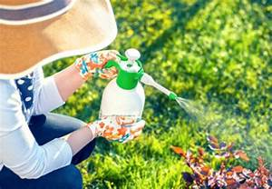 Cafard De Jardin Comment S En Débarrasser : contre les insectes dans le jardin tout pratique ~ Mglfilm.com Idées de Décoration