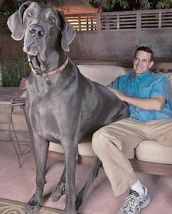 Meet The Giant! | Man's Best Friend | Dogs, World's ...