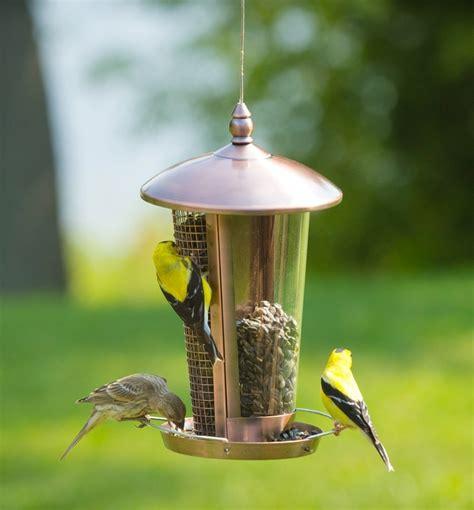 Bird Feeding Problems