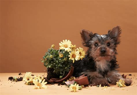 Cute Animals With Flowers To Make You Smile  Petal Talk. Two Year College Careers Cs Cleaning Services. Harvard School Of Public Health. Tax Help Portland Oregon Tighten Skin On Face. We Buy Ugly Houses Atlanta Web Based Project. Birth Certificate Bond Redemption. What Time Do Yankees Play Today. American Heart Association Acls Class. Portable Heating Systems For Homes