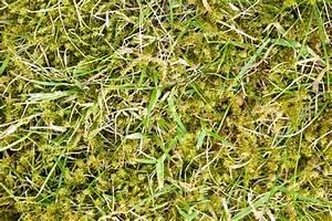 Wann Mäht Man Rasen : rasen mit moos kalken so bek mpfen sie das moos ~ Markanthonyermac.com Haus und Dekorationen