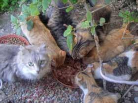 Katze Einschläfern Medikament