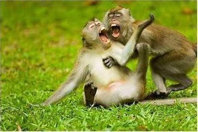 Funny Laughing Laugh Cartoon Monkeys Rat