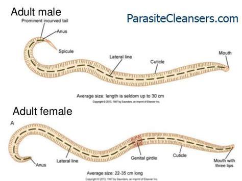 Parasitecleansers.com