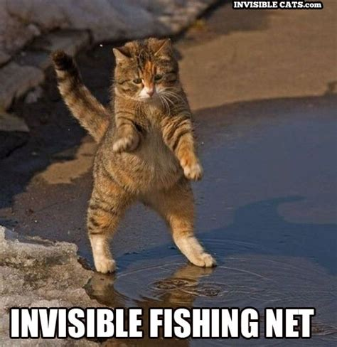 Invisible Cat Memes - 1000 images about gatos on pinterest police cats and kitty