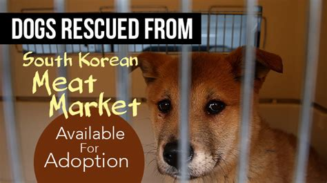dogs rescued  south korean meat market