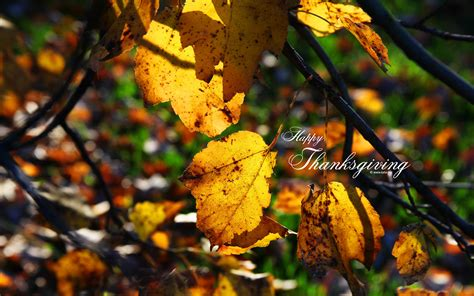 Fall Thanksgiving Computer Backgrounds by Fall Thanksgiving Wallpapers Wallpaper Cave