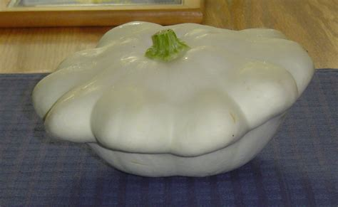 patty pan squash squash white bush scallop or patty pan 52 days american seed co