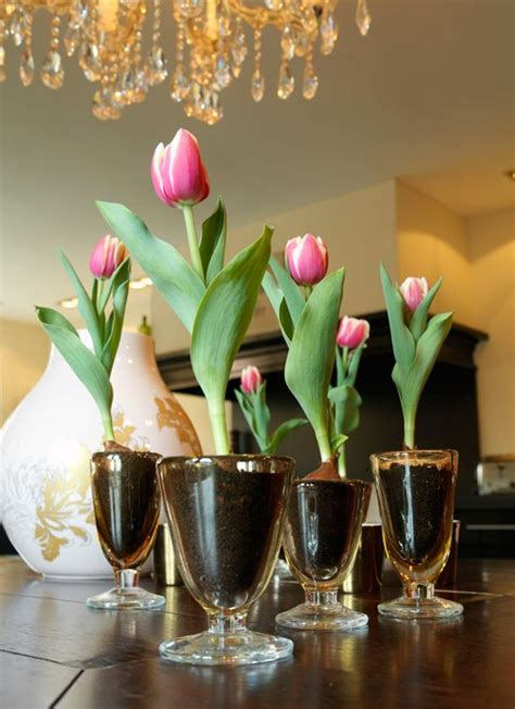 How To Bulbs Gorgeous Indoor Bloom And Color by 17 Best Images About Indoor Gardening On