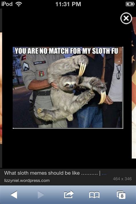 Cute Sloth Meme - cute sloth meme sloth meme pinterest
