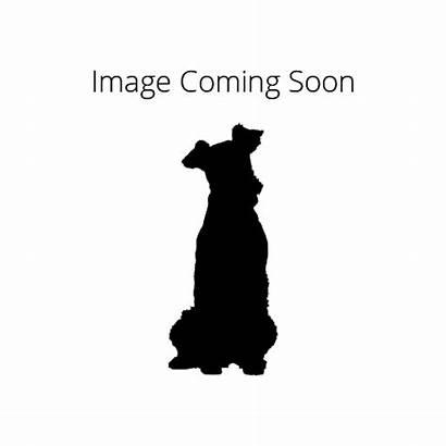 Dinmont Terrier Dandie Petland Strongsville