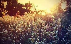 Free Wildflower Wallpaper - WallpaperSafari