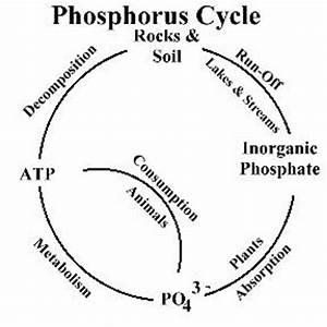 Philosophy of Science Portal: Importance of phosphorus