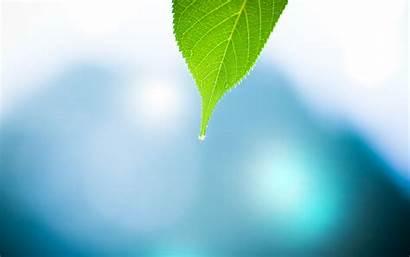 Leave Wallpapers Macro Leaves Nature Water Leaf