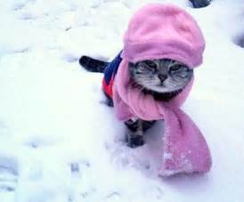 can a cat catch a cold from a human can you catch a cold from cats and dogs